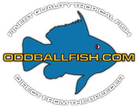 Oddball Fish - Freshwater Tropical Aquarium Fish