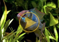 Acclimate Your Fish Video
